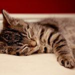 絶対に眠れるようになる14の方法